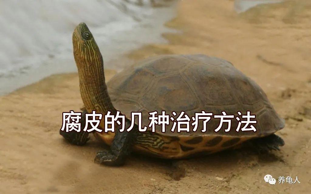 烏龜出眠的季節,我們再來談談豆腐皮的治療
