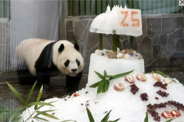 首只旅韩熊猫宝宝初次亮相所念皆星河