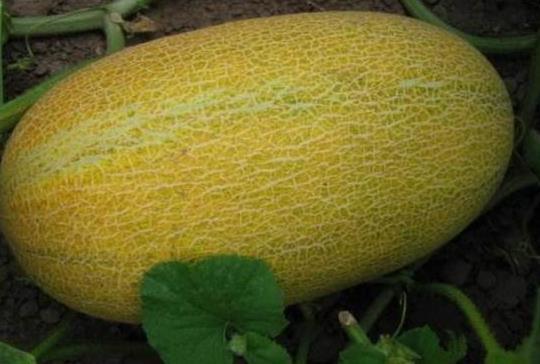 心理學:四個哈密瓜,哪個最甜?測出你近期的運勢好不好?