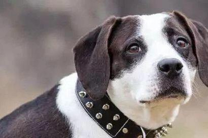 生肖狗:最不宜生什麼屬相的孩子?尤其是70年的