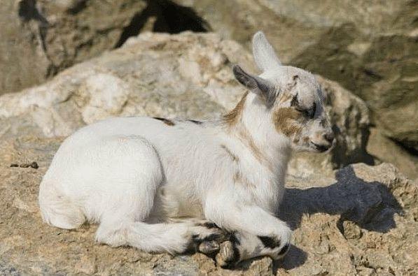 生肖羊:你有「貴人」相助,就算躺著也能發財!
