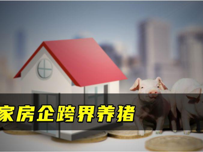 「跨界歌王第四」千家房企跨界养猪