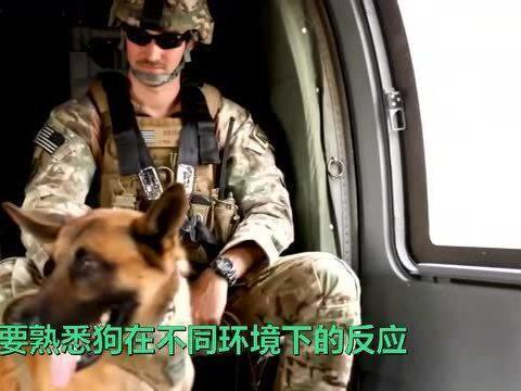 「直升机教程」搜救犬的直升机训练