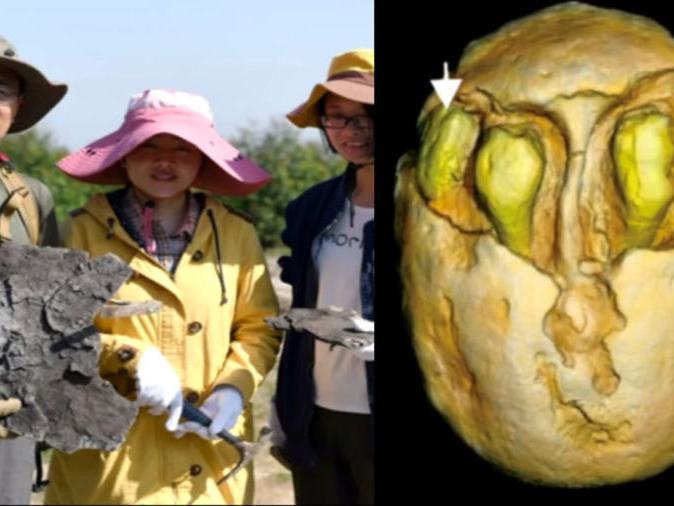 「人类化石断代十三万年」1500万年前南酸枣化石在福建被发现!形态比现在更多样