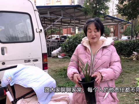 「怎样判断墨兰该浇水了」家庭小故事,蕙兰耐寒冷而墨兰娇气,这两种兰花您养了吗?