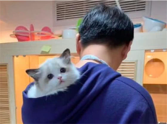 宠物与生活-王思聪的猫值20万,秦奋的狗300万,却都输给了赵忠祥的宠物