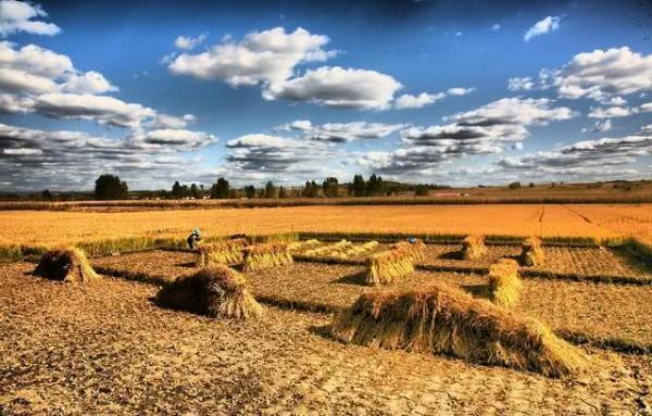 美军曾计划将20万吨燃烧弹撒向日本稻田,至少导致3000万人陷入大饥荒