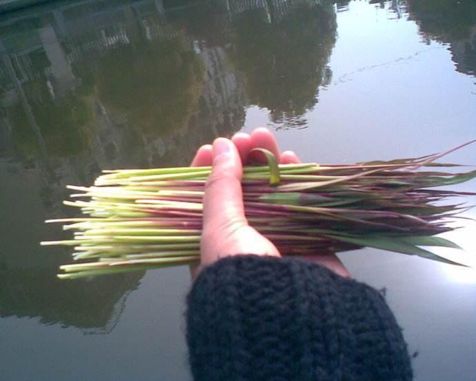 """这种草芽拔起来能生吃,农村娃小时候的零食,春天过了就""""飞走"""""""