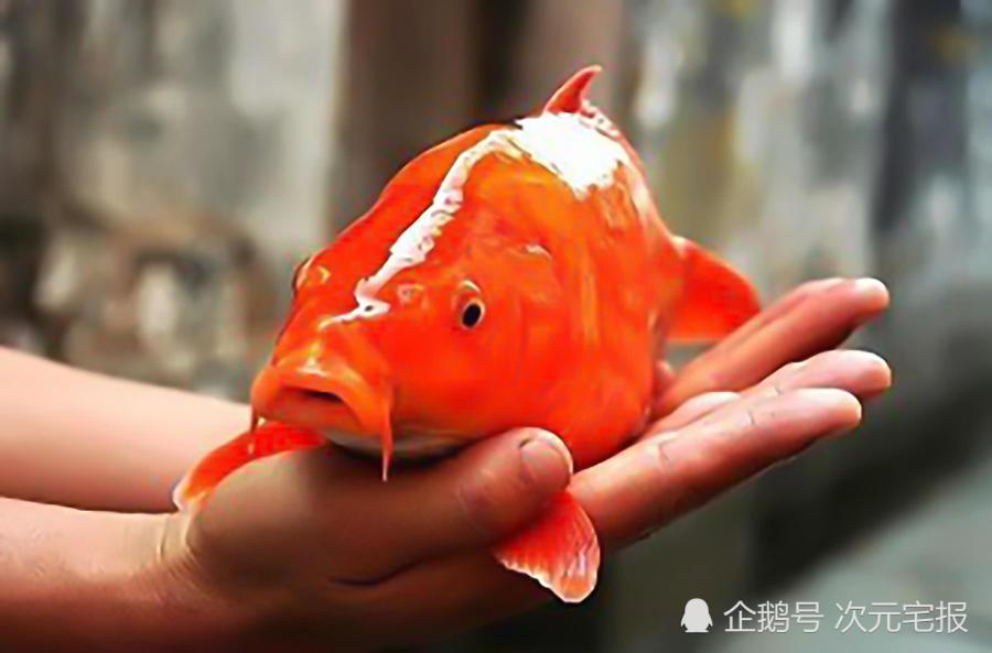 原來小鯉魚歷險記里的生物都是有原型的,雙面龜長得太嚇人了